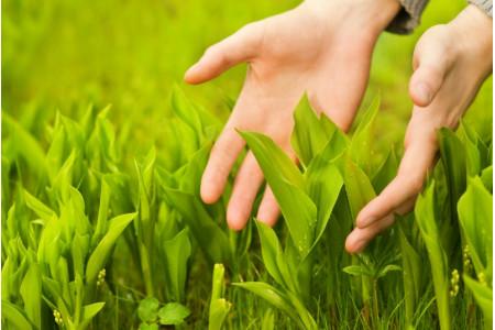 Замглавы Мособлдумы поддержал возвращение уроков экологии в школьную программу